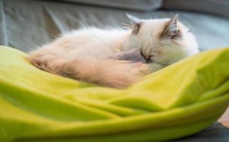 reine weiße Katze, die auf grünem Kissen schläft. foto