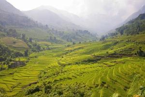 Reisfelder foto