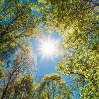 sonniger Baldachin von hohen Bäumen. Sonnenlicht im Laubwald, Sommer