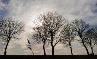 Bäume im Sonnenlicht entlang Ackerland im Winter