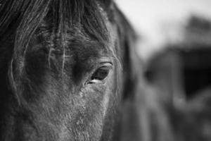Pferdeauge hautnah