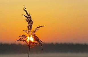 Sonnenaufgang über einer nebligen Landschaft im Frühjahr