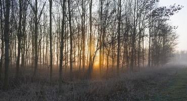 Sonnenaufgang in einem nebligen Wald im Winter