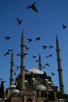 Selimiye Moschee / Edirne / Truthahn