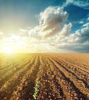 Sonnenuntergang in Wolken und gepflügtem Feld