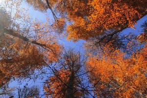 Herbstlaub foto