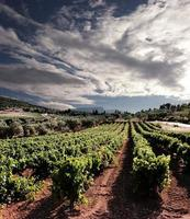 dramatischer Himmel auf Weinrebenreihen