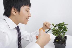 glücklicher mittlerer erwachsener Geschäftsmann, der Topfpflanze beschneidet foto