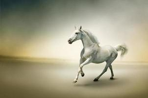 weißes Pferd in Bewegung foto