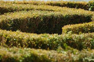 das Gartenlabyrinth foto
