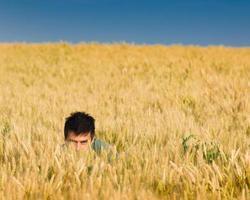 Verstecken und Suchen in Weizen foto