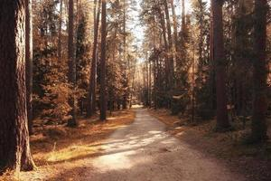 goldener Herbstlandschaftsindischer Sommer