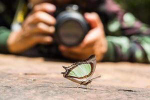 Smaragd-Nawab oder indischer gelber Nawab-Schmetterling foto