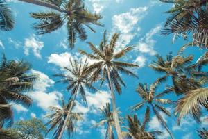 tropische Palmen.