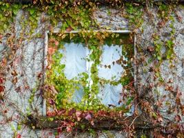 Efeu bedeckt Fenster, Newport, County Mayo foto