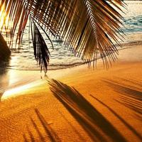 schöner Sonnenuntergang am Strand der Seychellen mit Palmenschatten