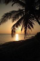 Palmenschattenbild bei Sonnenuntergang - hohe Sonne
