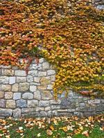 Herbstlaub an einer Wand in der Festung Kalemegdan, Belgrad foto