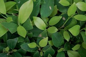 Umweltschutzkonzept. grüne Blatt Textur.