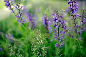 wilde Orchideenblume foto