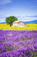 Sonnenblumenfeld über bewölktem blauem Himmel foto