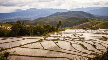 Südostasiatische Reisfeldterrassen in Thailand.