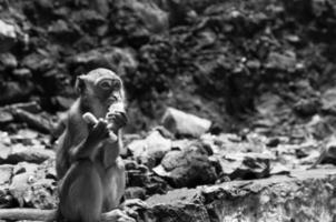 Batu-Höhlen foto