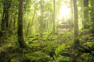 Regenwald foto