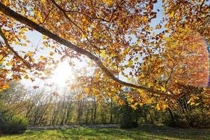 Blätter im Park foto
