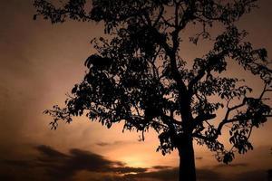 Silhouette des Baumes foto