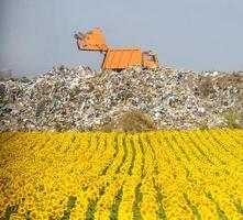 Feld der Sonnenblumen mit Müllkippe im Hintergrund foto