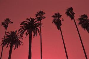 schwarz beleuchtete Palmen Nachmittag Sonnenuntergang