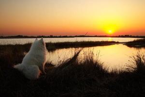 Hund schaut auf den Sonnenaufgang foto
