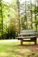 leere Bank im hinteren Tropfen Spinnennetz foto