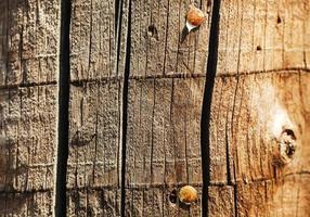 altes Holz mit Hobnails foto