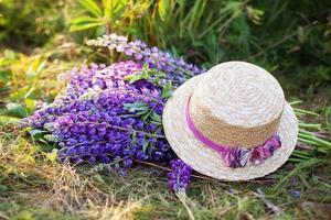 lila Lupinenblumen bedeckt mit Strohhut im Feld