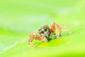 braune Spinne auf grünen Blättern foto