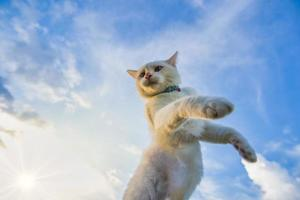 weiße Katze von unten geschossen