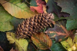 Herbst Tannenzapfen auf Blattbett foto