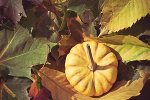 orange Kürbis im Sonnenschein foto