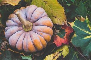 Kürbis und Herbstlaub foto