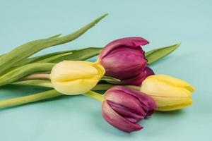 rote und gelbe Tulpen auf blauem Hintergrund