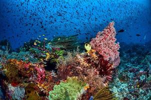 Nahaufnahme des Korallenriffs