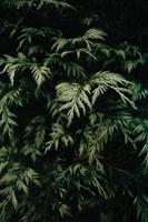 grüne Pflanzenblätter foto