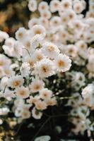 Gruppe von weißen und gelben Blüten foto