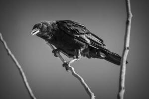Vogel thront auf Ast
