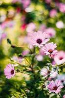 rosa Blumen im Garten foto
