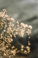Nahaufnahme der getrockneten Pflanze foto