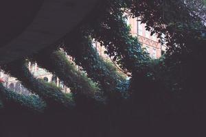 Efeu wächst in der städtischen Szene