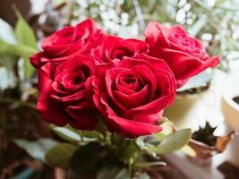 Nahaufnahme von roten Rosen